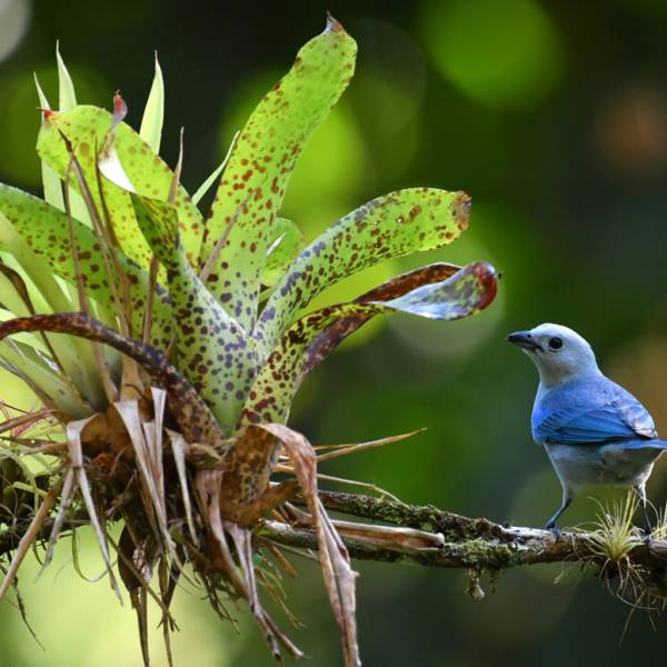 workshop fotografia Costa Rica