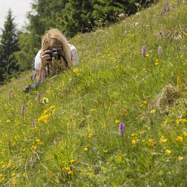 workshop fotografia Fotografare le Scarpette di Venere e altri fiori alpini: lab di macrofotografia