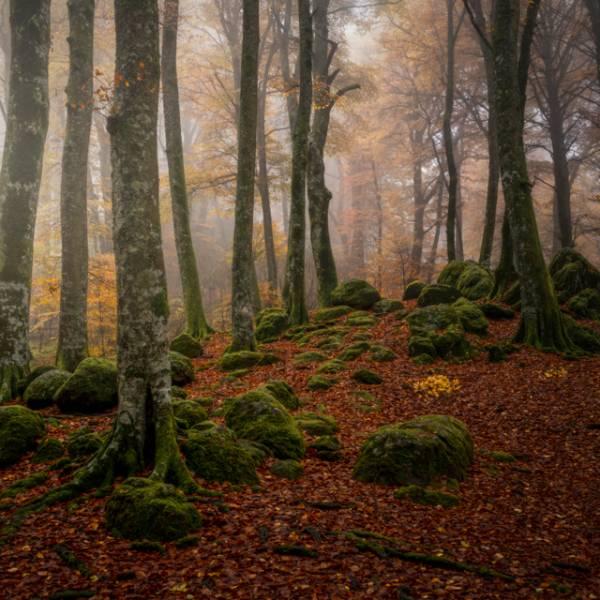 workshop fotografia Autunno in Tuscia tra foliage e borghi fantasma