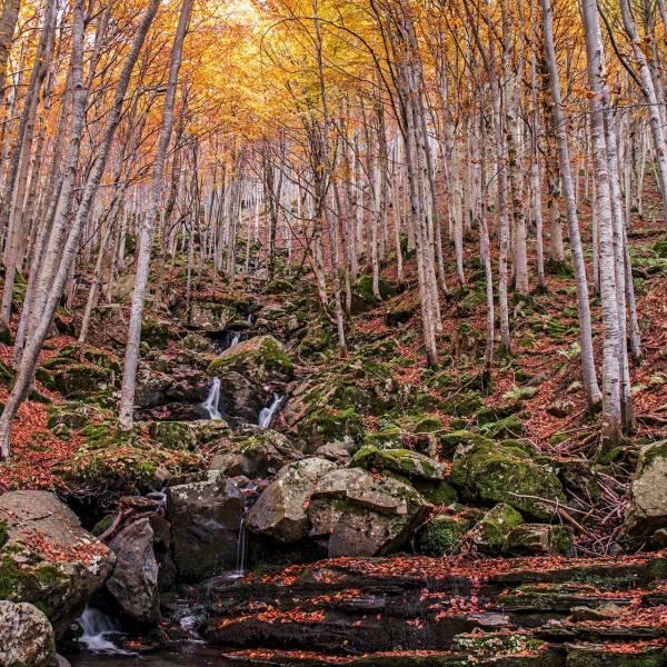 workshop fotografia CASCATE DEL DARDAGNA nel foliage autunnale