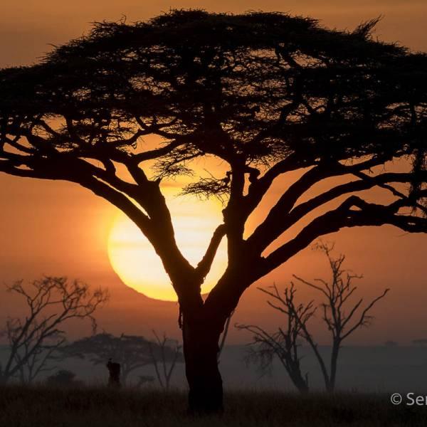 workshop fotografia Tanzania Photo Expedition